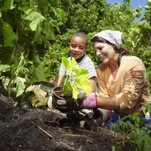 Women guides young mixed race boy through the process of plantiing a new plant in Orgnaic garden.